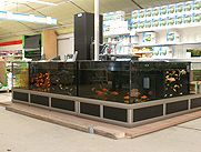 Example of a fishrack for ornamental fish in a gardencentre